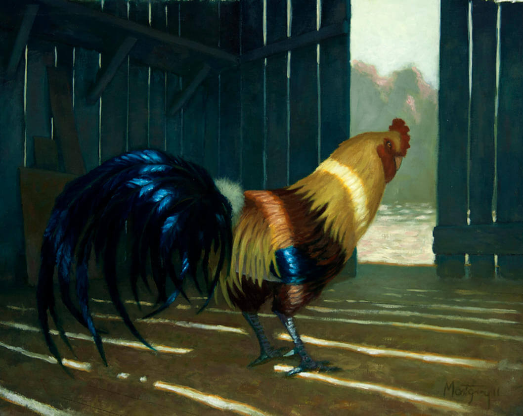 A rooster standing in an old wooden barn